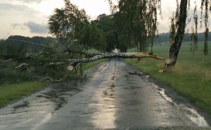 TH. umgestürzte Bäume